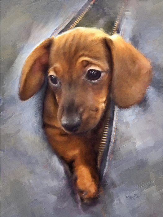 Miniature Dachshund Digital Art - Miniature Dachshund by   DonaRose
