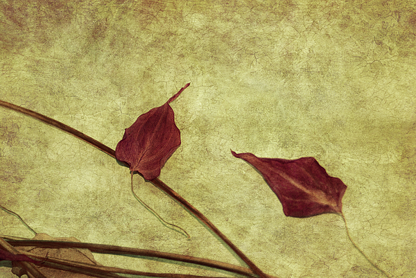 Textures Photograph - Minimal Art by Aimelle
