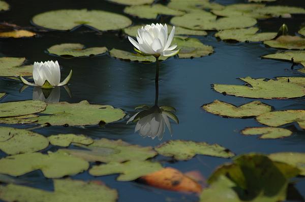 Nature Photograph - Mirrored Reflections 2 by Devane Mattoni