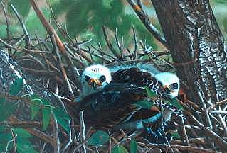 Mississippi Kite Babes Painting by Doug Quarles