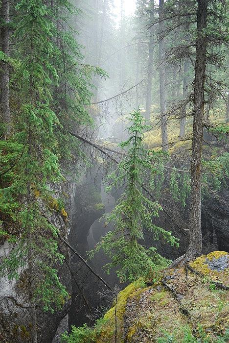 Landscape Photograph - Mist Forest by Kim Blumenstein
