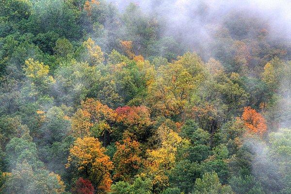 D L Ennis Photograph - Misty Mountainside by D L Ennis