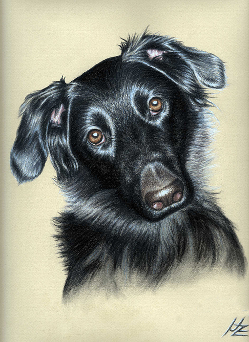 Dog Pastel - Mixed Race Paula by Nicole Zeug