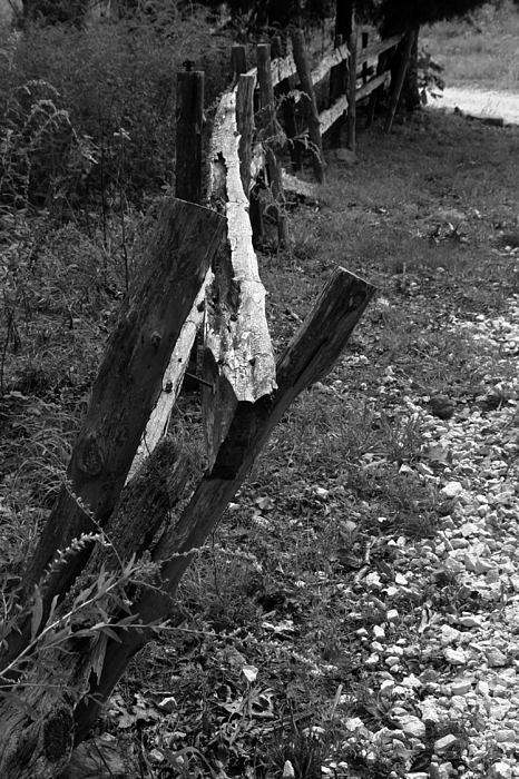 Ansel Adams Photograph - Momsvisitfence2 by Curtis J Neeley Jr