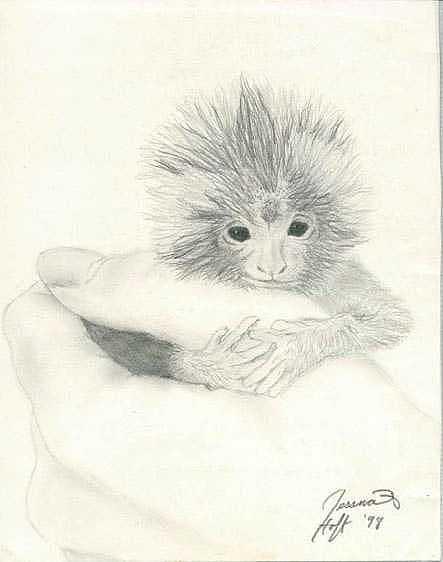 Monkey Drawing by Jesska Hoff