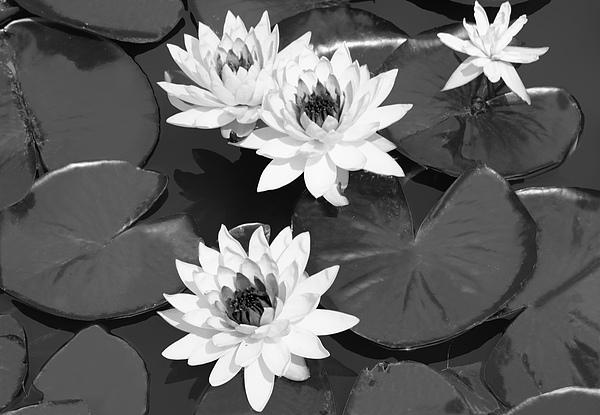 White Photograph - Monochrome Lilies by Milena Ilieva