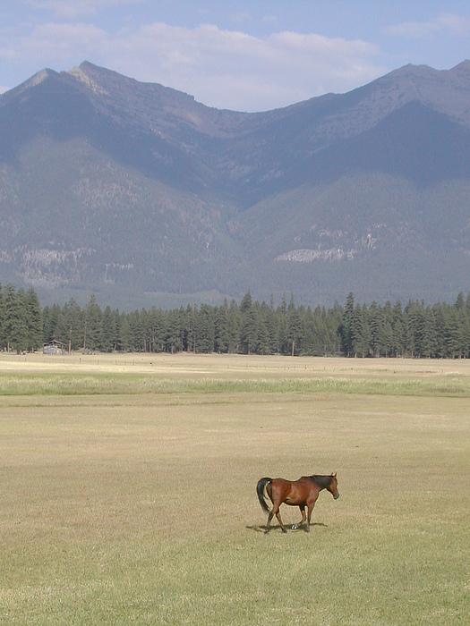 Montana Photograph - Montana Ranch by Lisa Patti Konkol