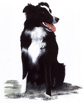 Pet Portrait Painting - Monty by Janice M Booth