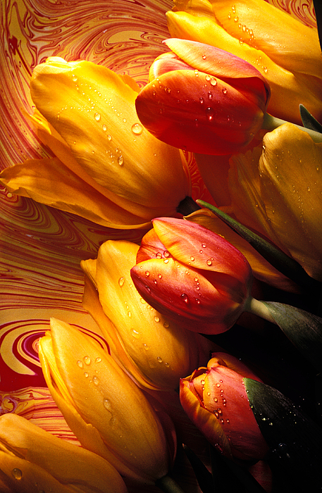 Tulip Photograph - Moody Tulips by Garry Gay
