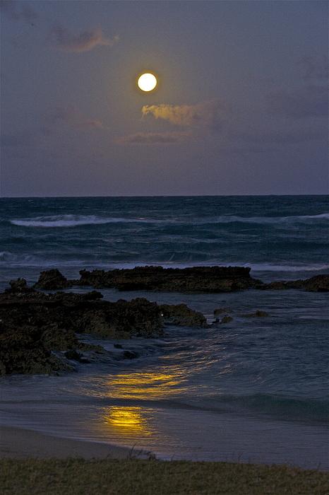 Eddie Freeman - Moon Over The Beach 2