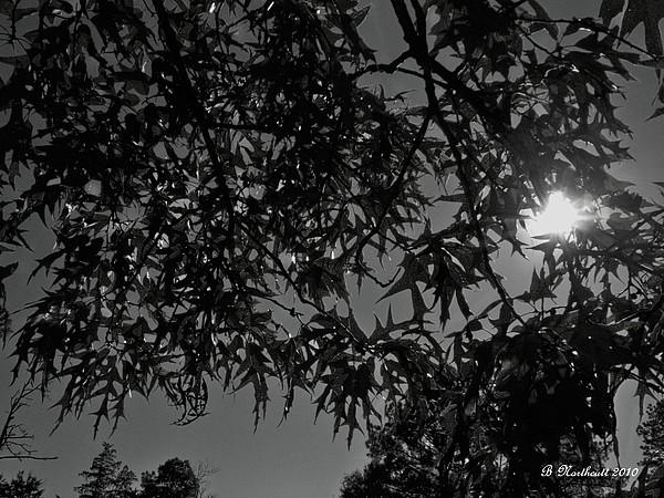 Moon Photograph - Moonlight by Betty Northcutt