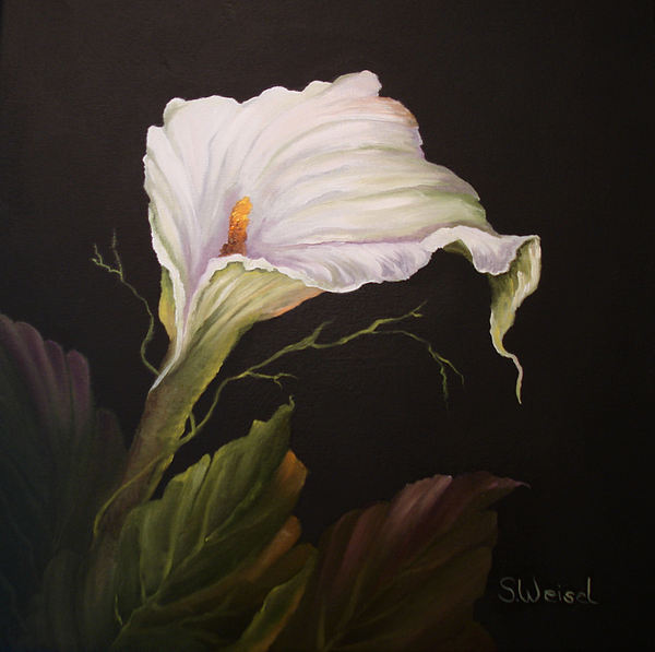 Flower Painting - Moonlit Calla Lily by Sherry Winkler