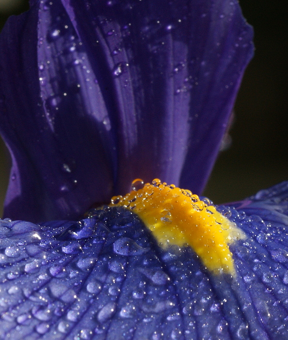 Flowers Photograph - Morning Dew by Tim Riley