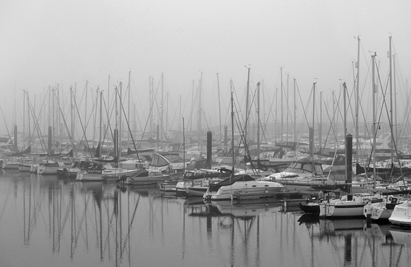 Black And White Photograph - Morning Fog by Terence Davis