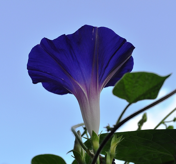 Morning Glory Photograph - Morning Glory Sky by Ruben Barbosa