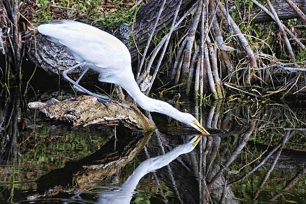 Egret Photograph - Morning Sip by Jody Lovejoy