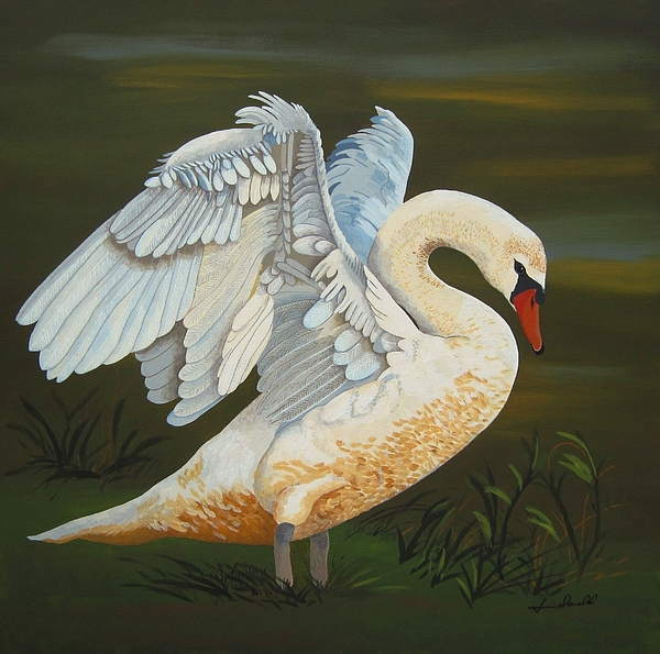Swan Painting - Morning Stretch by Jennifer  Donald