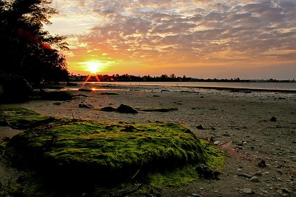 Sun Photograph - Moss On The Beach by Angie Wingerd