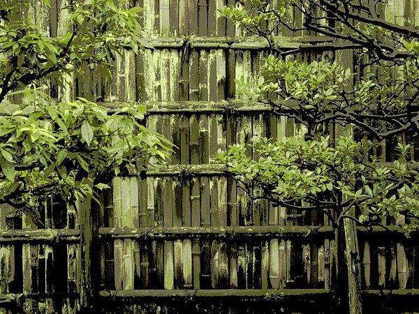 Moss Photograph - Mossy Bamboo Fence - Digital Art by Carol Groenen