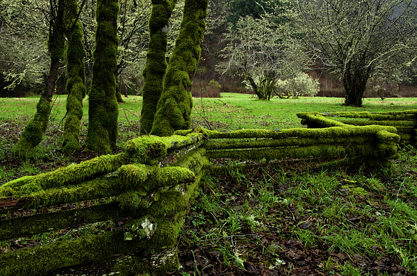 Moss Photograph - Mossy Fence 2 by Bob Christopher