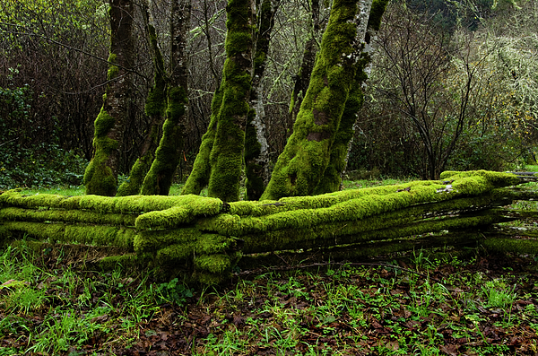 Moss Photograph - Mossy Fence 3 by Bob Christopher
