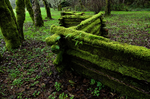 Moss Photograph - Mossy Fence 5 by Bob Christopher