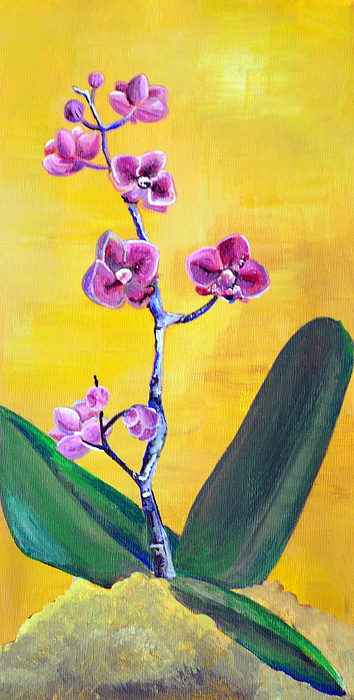 Orchid Painting - Moth Orchid by Amanda Christine Shelton