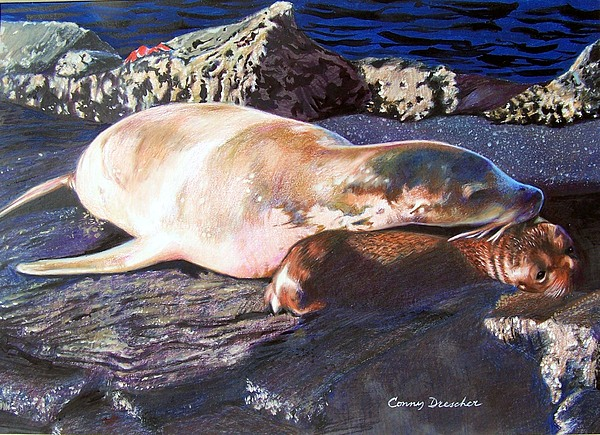 Sea Lion Mixed Media - Mother And Child Sea Lion by Constance Drescher