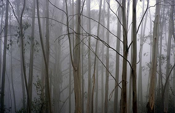 Landscape Photograph - Mountain Ash 2006 by Peter Adams