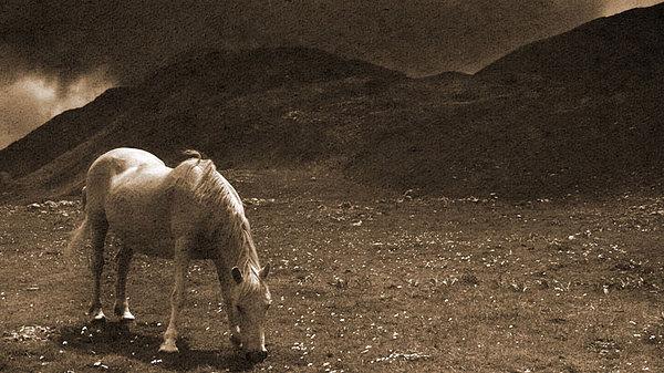 Horse Photograph - Mountain Horse by Jeff Larsen
