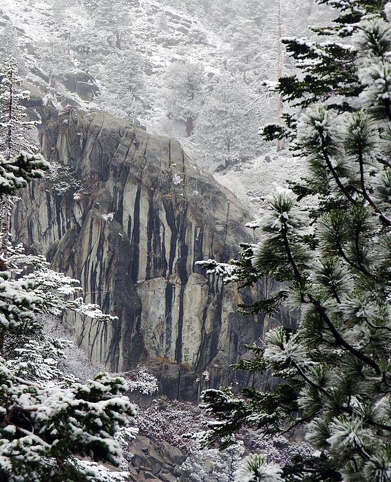 Trees Photograph - Mountain Pine IIi by D Kadah Tanaka