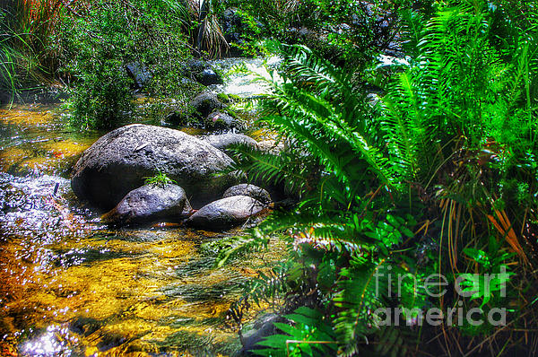 Mountain Stream Photograph - Mountain Stream by Blair Stuart