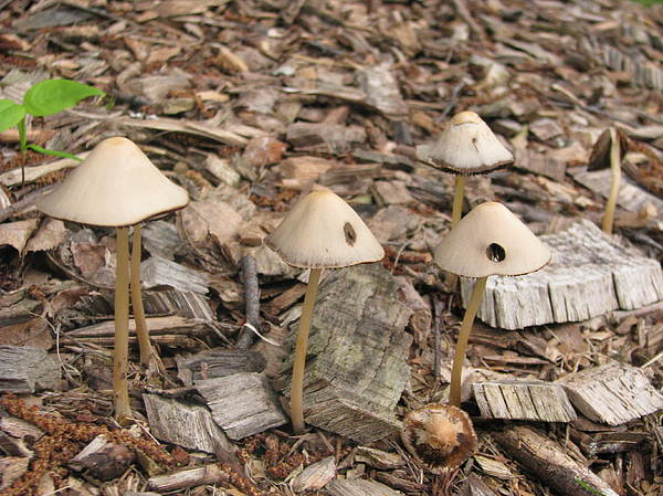 Landscape Photograph - Mushrooms by Hasani Blue