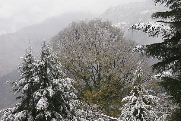 India Photograph - Mussoorie Winter 1 by Padamvir Singh