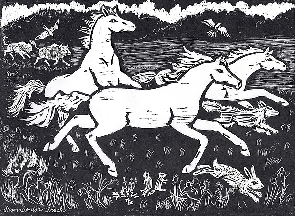Mustang Drawing - Mustangs Frisking On The High Plains by Dawn Senior-Trask