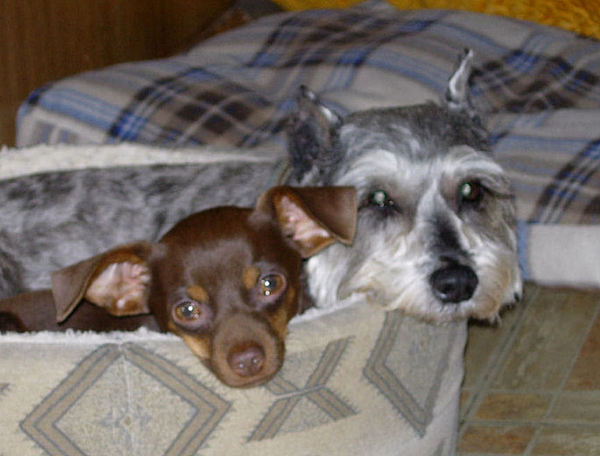 Dogs Photograph - My 10 Yr-old With My Baby by Stephanie  H Johnson