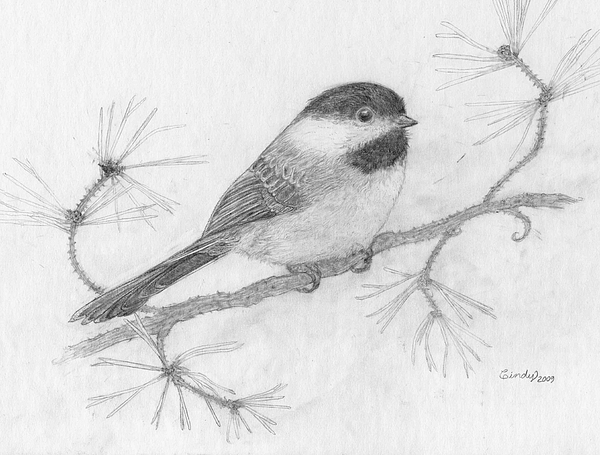 Chickadee Drawing - My Little Chickadee by Cynthia  Lanka