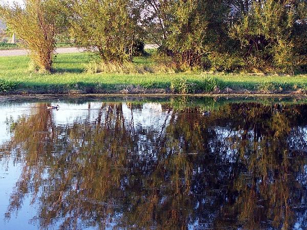 South Dakota Photograph - My Pond by Tracy Siebels