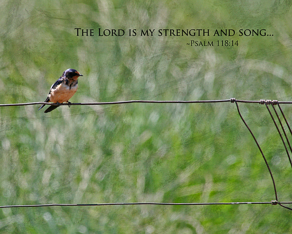 Nature Photograph - My Strength by Bonnie Bruno
