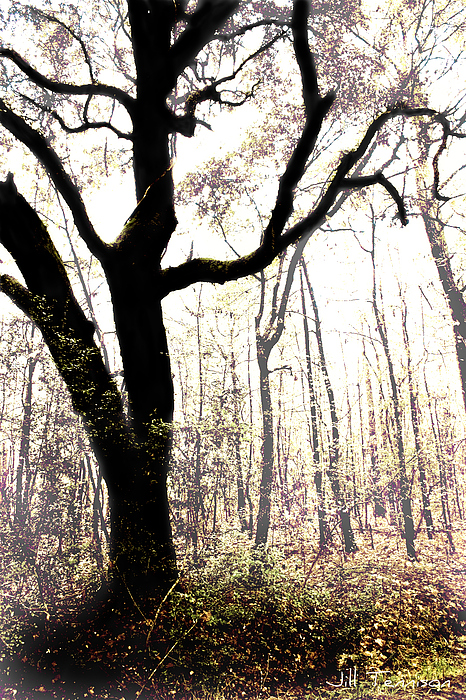 Tree Photograph - Mystery Of The Forest by Jill Tennison