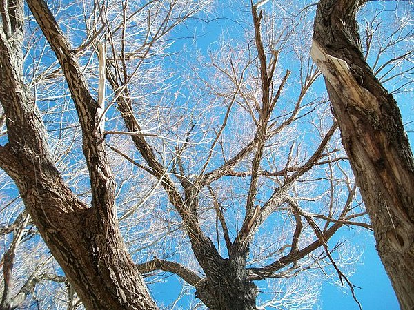Trees Photograph - Naked by Jacqueline Lewis