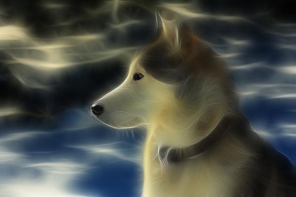 Dog Photograph - Nanuk Husky Fractal by Marjorie Imbeau