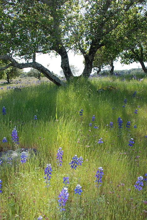Napa Photograph - Napa Hills Meadow by Dallas Hyatt