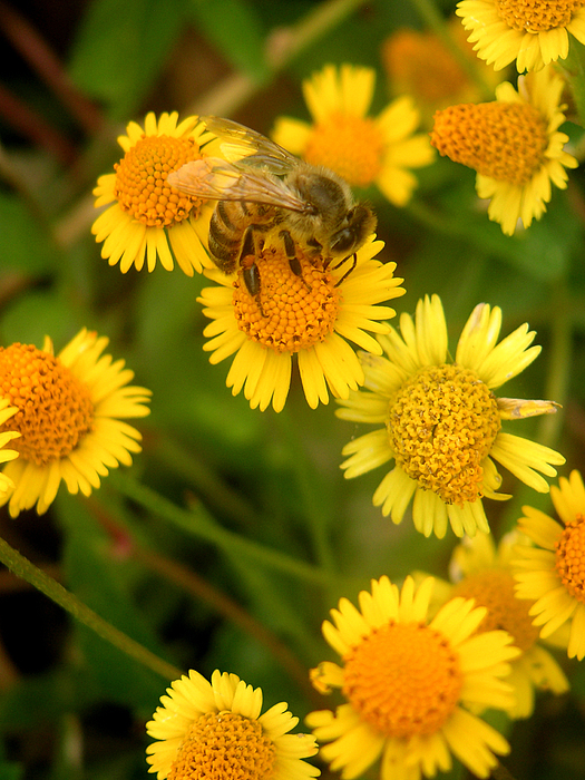 Nature Photograph - Nature In The Wild - The Nectar Company by Lucyna A M Green
