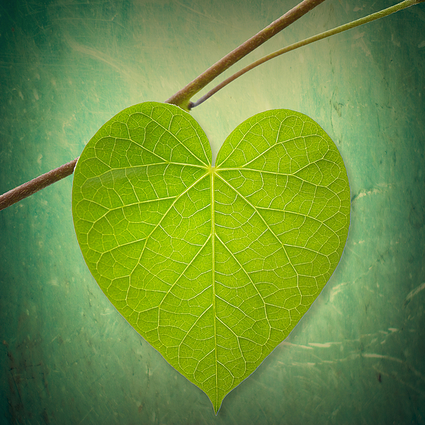 Heart Photograph - Nature Lover by Philippe Sainte-Laudy
