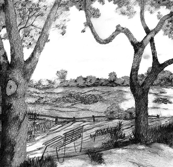 Nature Sketch Drawing by John Stuart Webbstock