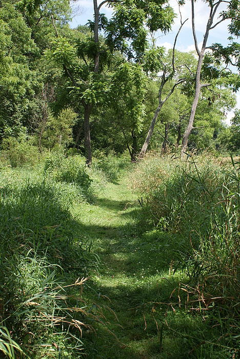 Nature Photograph - Nature Trail by Heather Green