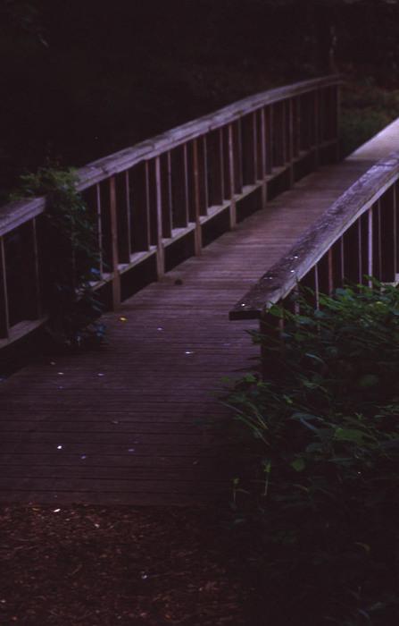 Radnor Lake Photograph - Natures Bridge by Randy Muir