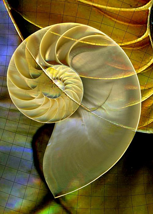Nautilus Photograph - Nautilus 5 by Maureen Chase