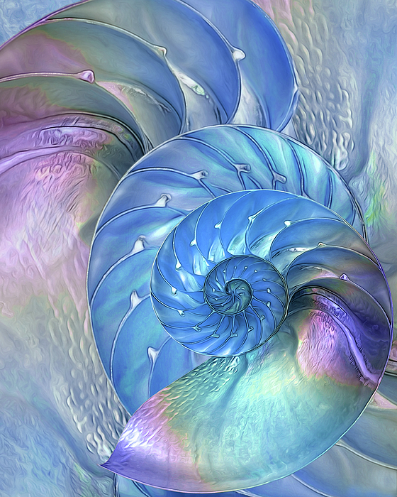 Nautilus Shell Photograph - Nautilus Shells Blue And Purple by Gill Billington